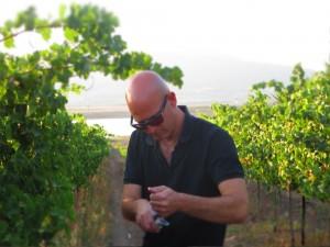 רועי לוי מודד בפראקטומטר את רמת הסוכר ביֵינָבים (ענבי יין) בטרם בציר