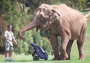 elephantcaddy