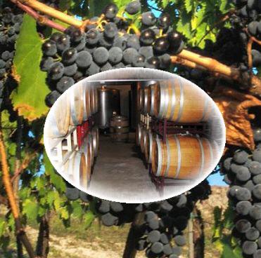 ענבי יין5
